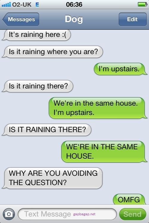 Funny Text About Raining vs Dog