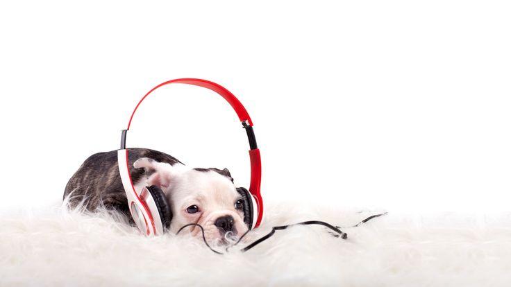 Kaikki tarvitsevat joskus kuuntelijaa. Toiset ovat parempia kuuntelijoita kuin toiset. Kuuntelijan rooli ei ole helppo. Helposti lähestyttävät ja luotettavat ihmiset valikoituvat herkemmin kuuntelijoiksi. Jatkuva muiden tsemppaaminen ja huolien kuuntelu voivat kuitenkin käydä pidemmän päälle raskaaksi. Etenkin, jos tuntee, että lähipiiri on yhteydessä vain silloin, kun on murheita ja huolia. Negatiiviseen ajatuskehään joutuneelle ihmiselle on vaikea …