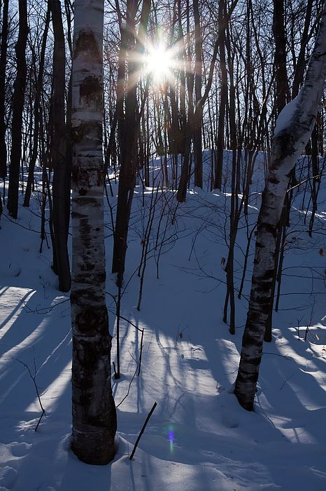 Winter Star in Gatineau Park, Quebec - Ottawa area, Canada by Tatiana Travelways