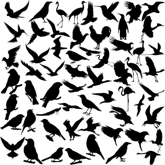 Bird silhouette digital clipart, 60 PNG, 60 JPG, Instant download,