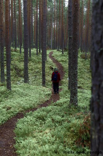 Forest path in Seitseminen national park in Finland. This is very finnish...