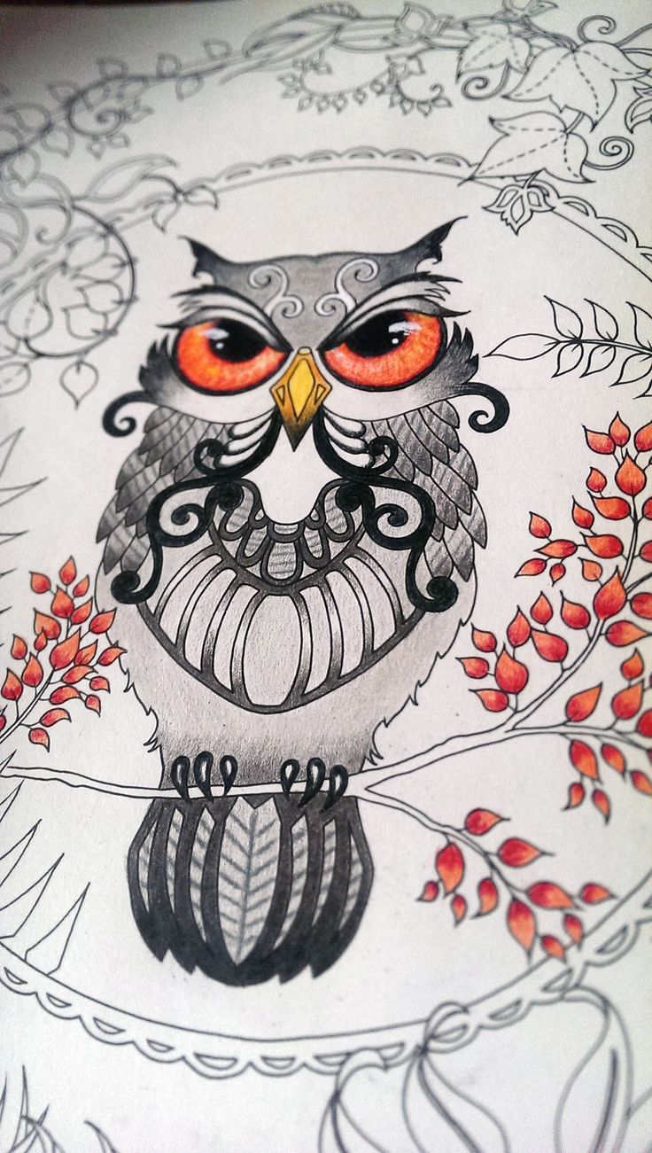 Johanna Basford adult coloring enchanted forest owl