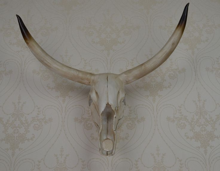 wall mounted yak skull wall art plaque hunt sculpture-faux taxidermy modern hanging home decor ornamnent