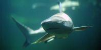 Speyer aquarium