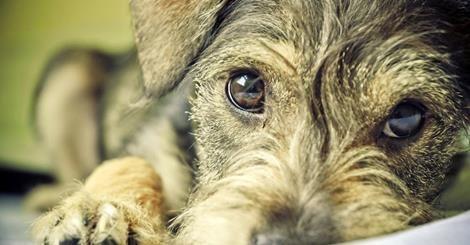 il popolo del blog,: Il tuo cane riconosce i bugiardi e non si fida di ...
