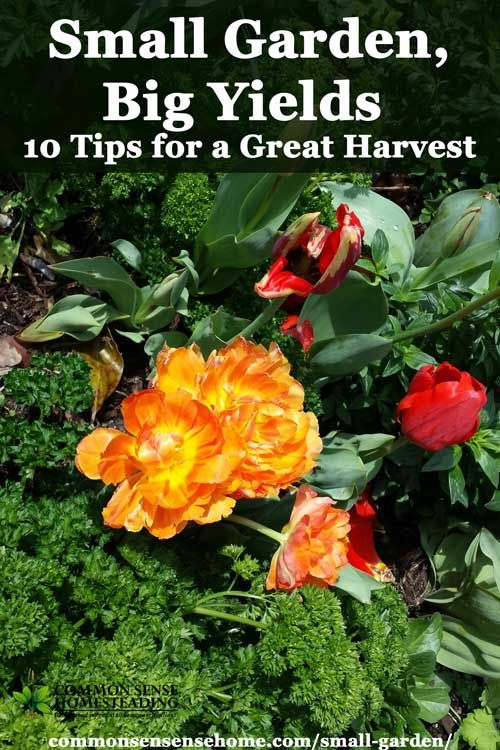 Small Garden, Big Yields – 10 Tips for a Great Harvest
