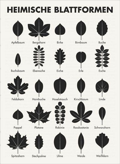 Infografik zum Bestimmen der Blattformen, also der…