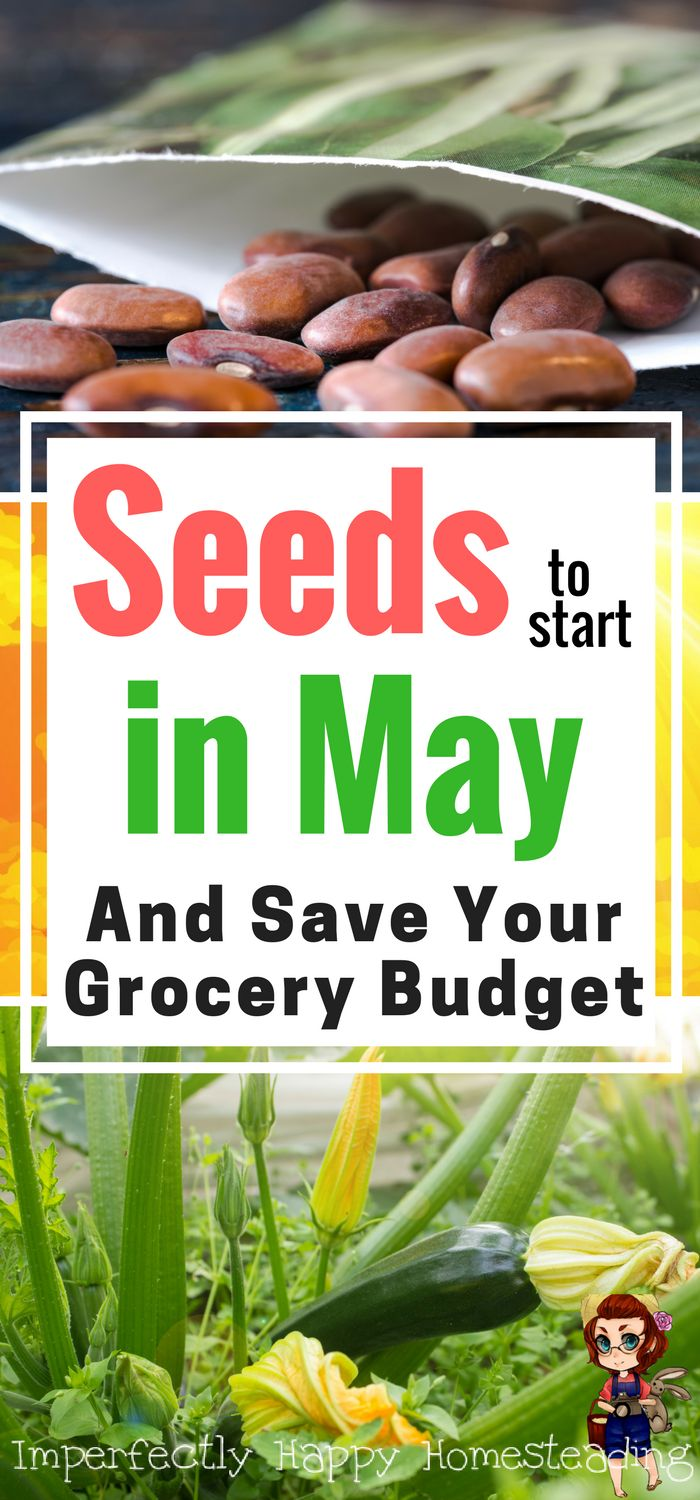 What seeds to plant in May and save your grocery budget by growing your own food. A backyard or homestead garden is great for growing healthy organic food.
