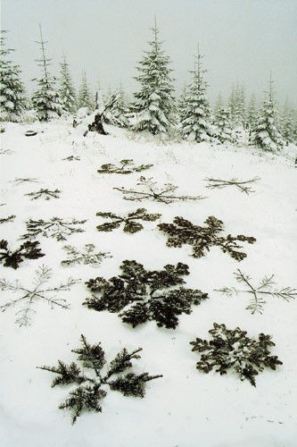 Done with evergreen branches, this would be so cool... how did they do this and leave no footprints in the snow though? New snow filled in prints, Maybe wore snowshoes.