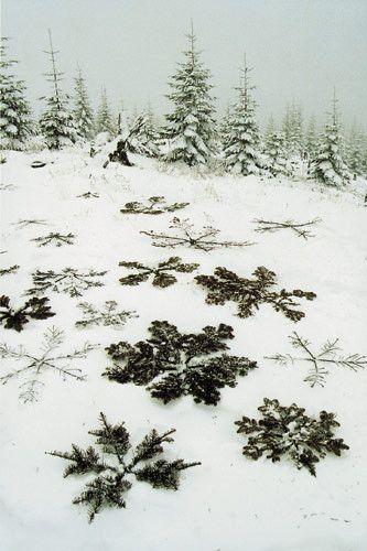 Pine snowflakes.