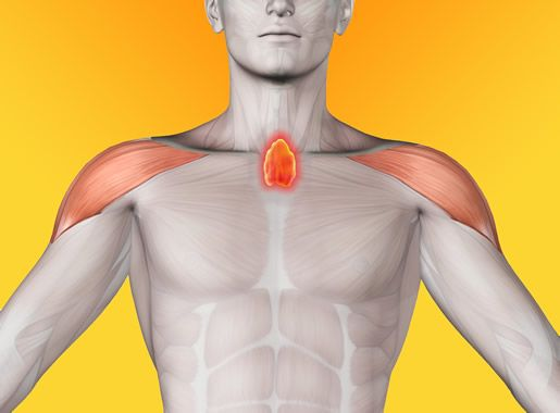 """Timüs Bezi (Yaşam Enerjisi)  …Kendimizi mutsuz hissettiğinizde Timüs'e vurun ve canlanın… Vücudumuzun en gizemli hayati önemi olan organlarından biri Timüs bezidir. Yeri ise iki göğüs ortası yani tiroit bezinin alt kısmında ve göğsün tam ortasındadır. Bu bez """"bağışıklık sisteminin"""" merkezidir. Kemik iliği gibi bi... Devamı için Görsele Tıklayın."""