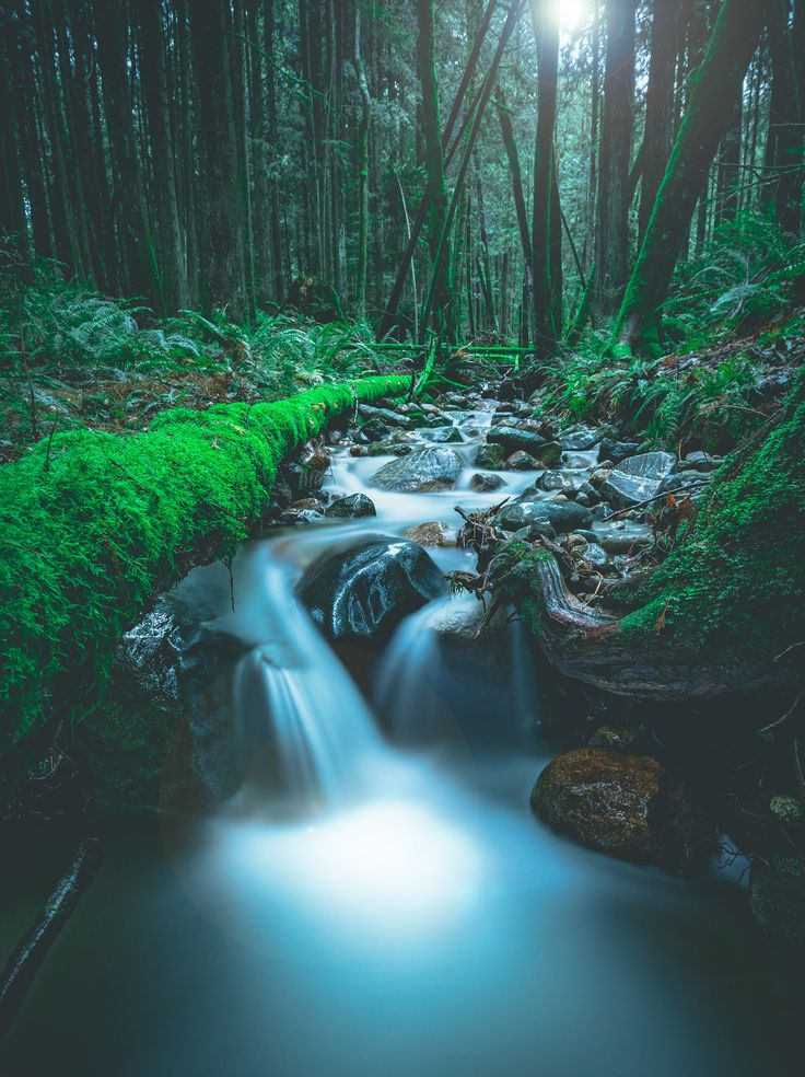 A friendly little stream on the side of Burke Mountain BC [1531x2048](OC)