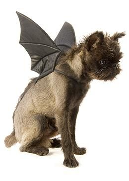 Bat Wings Dog & Cat Halloween Costume