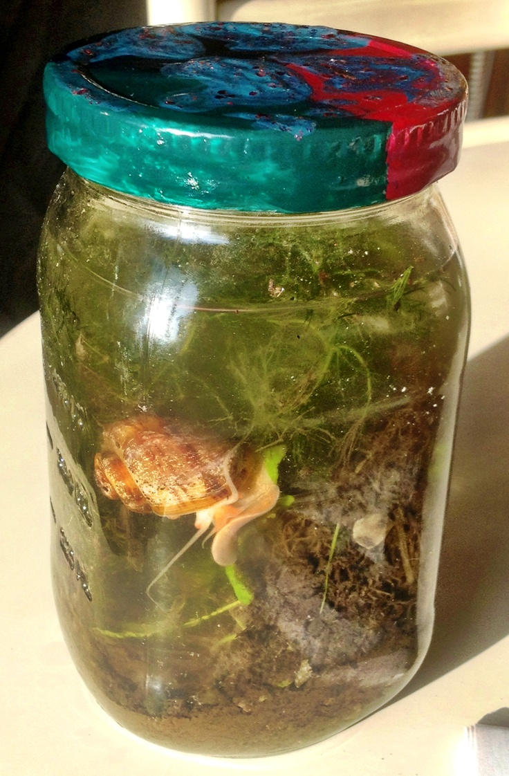 Diy Ecosphere Algae Pond Water Soil Plant And A Snail Decorated The Cover Of A Glass Jar