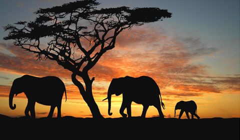 Elephant silhouettes against the sunset in Nambiti Plains Game Lodge.
