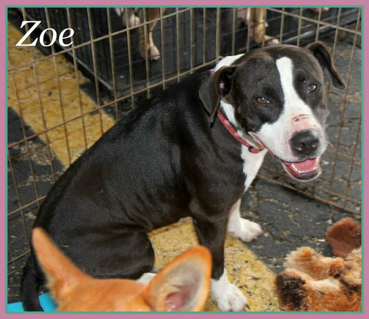 Zoe - Available for Adoption!
