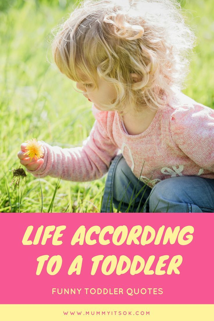 life according to a toddler, favourite funny toddler quotes, toddler funny, life with a toddler, toddler funny hilarious, funny toddler quotes, toddler life, awesome toddler quotes, toddler behaviour, toddler, funny things toddlers do, toddler thoughts, toddlers are crazy, toddlers are to loud, toddlers behave