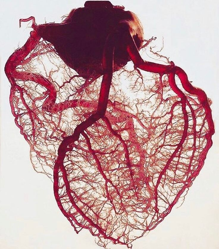 """46.7k Likes, 343 Comments - Medicaltalks (@medicaltalks) on Instagram: """"Behold, the heart's perfectly aligned vasculature! As seen above, the coronary circulation is…"""""""