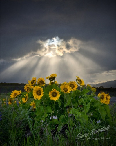 """""""Incluso la noche mas oscura terminará y el sol saldrá""""  ~Victor Hugo beautiful with the sun shining thru"""