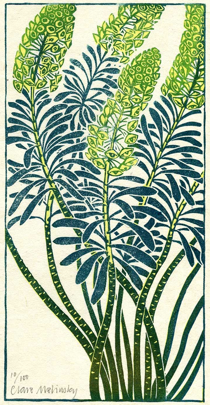 Euphorbia. Edition of 100 | Clare Melinsky's lino-cuts in colour and black and white follow the style of traditional woodcuts More
