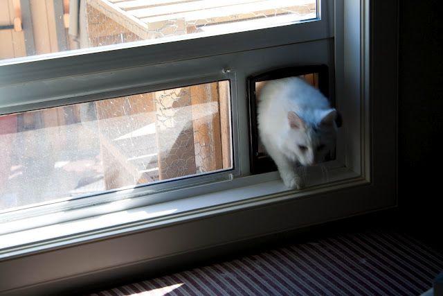 outdoor can enclosure  using GORM, chicken wire, window cat door insert & hardware stuff