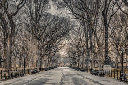 Nowy Jork Central Park Assaf Frank - plakat
