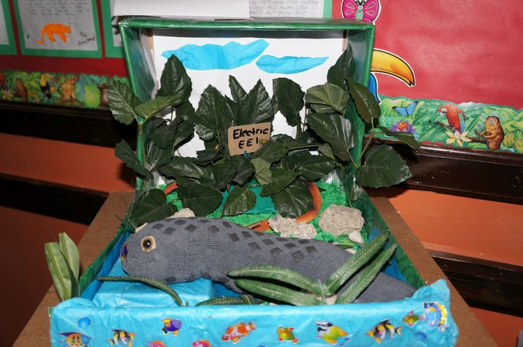 electric eel diorama | Science Projects | Pinterest ...