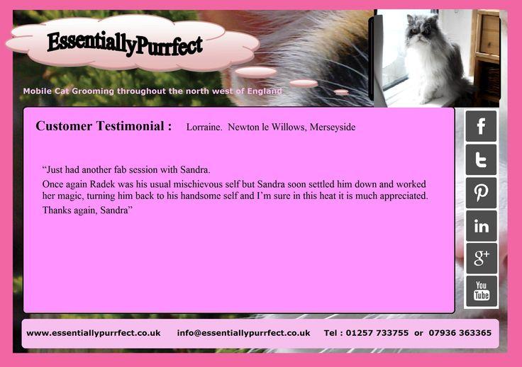 Customer Testimonial of EssentiallyPurrfect #mobile #Persian #cat #catgrooming service.  Lorraine #NewtonleWillows #Merseyside
