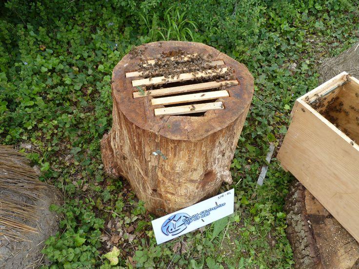http://www.untoitpourlesabeilles.fr/blog/wp-content/uploads/2012/05/P1070753.png