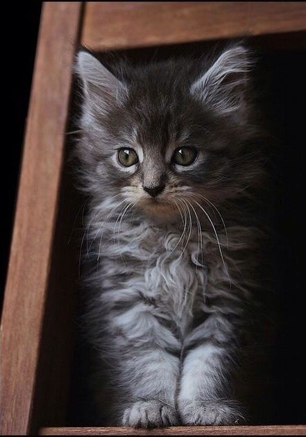 just a sweet kitten ....come home with me ...