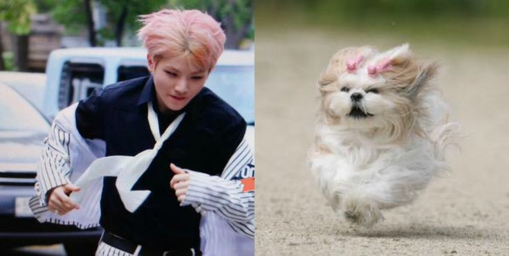 Seventeen's Woozi and his dog doppelgänger Credit: f5b4momo on Twitter