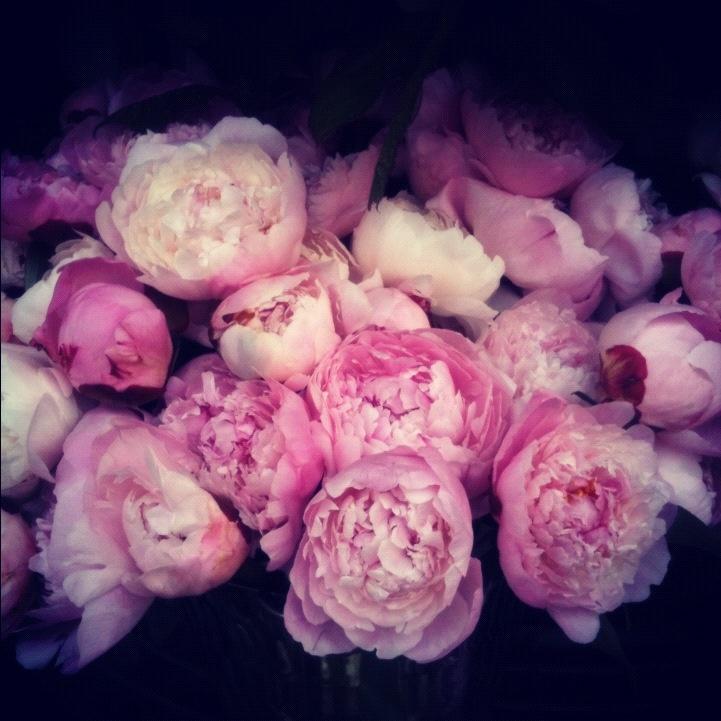 17 best images about pivoine et renoncule on pinterest little mix sweet pea bouquet and. Black Bedroom Furniture Sets. Home Design Ideas