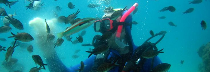 Discover Scuba #Diving #Experience in #Halkidiki #Greece