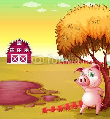Fototapeta Świnia wskazując stodole w gospodarstwie świń