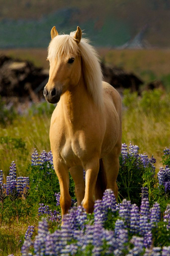 Horse, hest, animal, purple flowers, beauty, beautiful, gorgeous