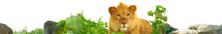 Hours, Prices & Directions for Saint Louis Zoo, children 2 & under FREE