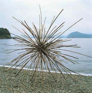 andy goldsworthy - alien creature urchin for attention