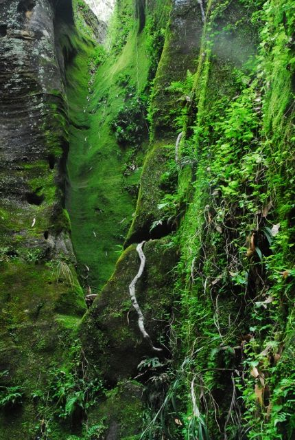 Carnarvon Gorge, Queensland. This is a shot of a side hollow off Wards Canyon at Carnarvon Gorge.  Carnarvon is a fabulous place to visit, so much to see, so many photo opportunities.