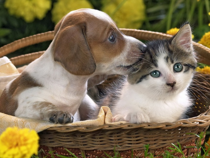 Kittens And Puppies Together Kittens and puppies