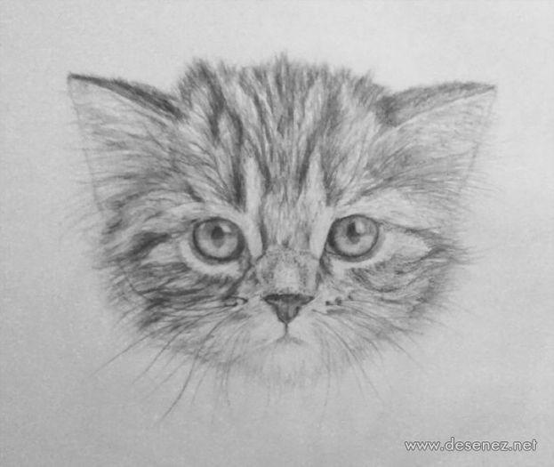 Desene in creion cu animale - deeascumpik