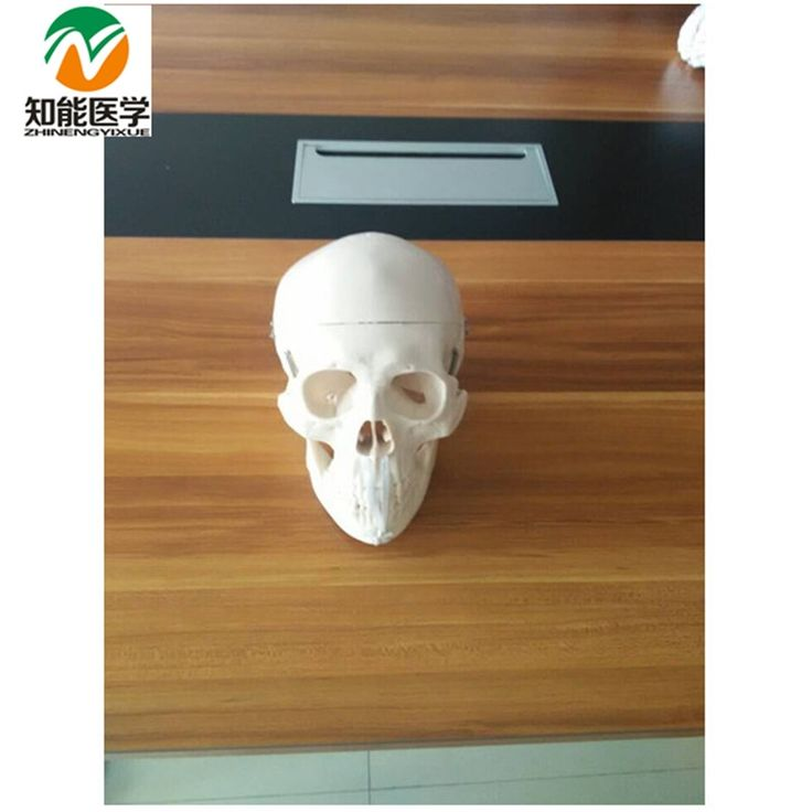 18.95$  Watch here - http://ali8jm.shopchina.info/1/go.php?t=1000001341228 - Life-Size Skull Model BIX-A1007 WBW164  #aliexpress