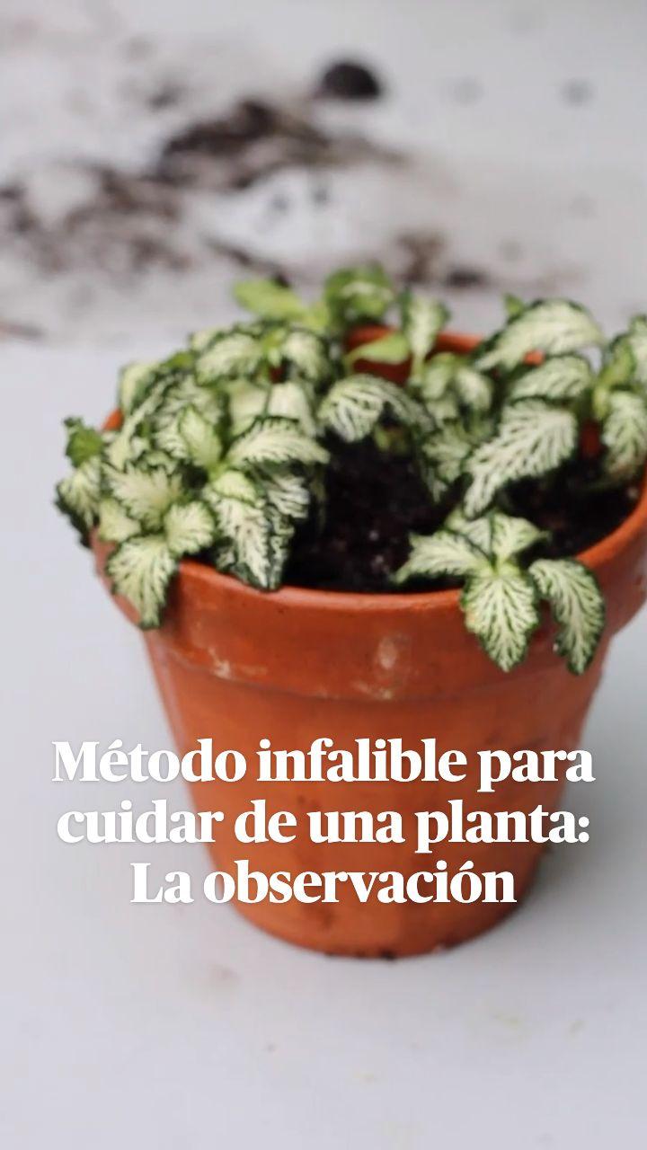 Potted Plants, Natural, House Plants, Planter Pots, Gardening, Plants, The Alchemist, Earth, Spring