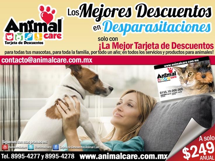 EN DESPARASITACIONES al presentar la TARJETA DE DESCUENTOS ANIMAL CARE obtienes los mejores descuentos del 10% al 50% en todos los servicios y productos para mascotas, con toda la RED de PROVEEDORES. Checa todos los descuentos en www.animalcare.co... Llámanos al 8995-4277 y 8995-4278 Escribenos a contacto@animalcare.com.mx