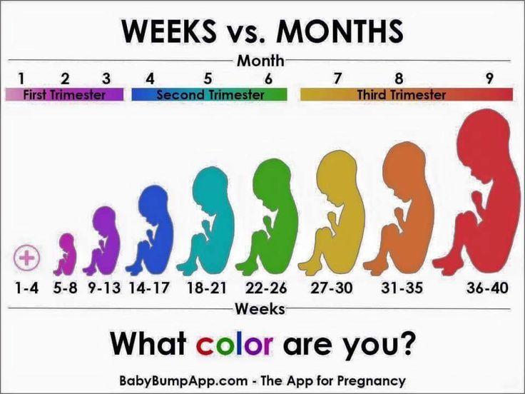 Weeks vs months pregnant | Pregnancy