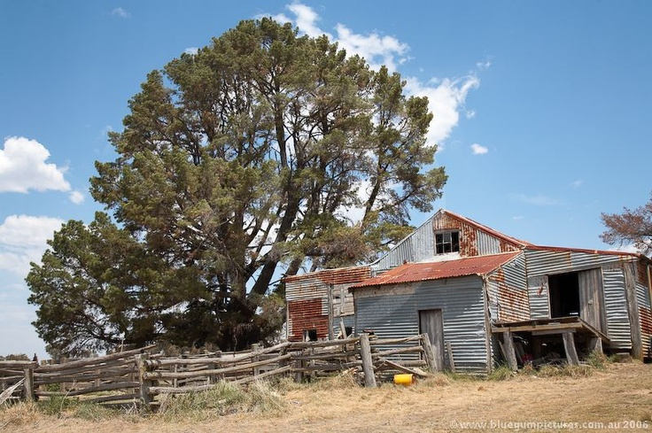Derelict shearing shed