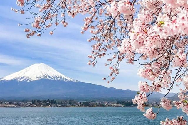 Cherry Blossoms Forecast In Japan In 2020 Japan Cherry Blossom Guide Japanese Cherry Blossom Festival Cherry Blossom Japan Japan Landscape Japanese Blossom