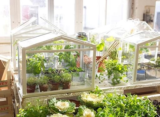 IKEA mini greenhouses are the best.