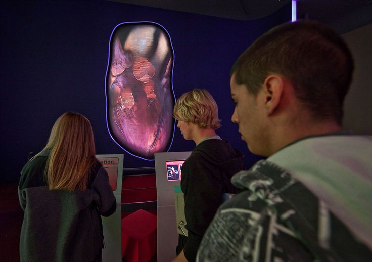 You The Experience (thincdesign.com). Giant Heart appears as it would in the body. Visitors take turns using their own pulse rates to drive thumping beat / view interior features of the heart in action
