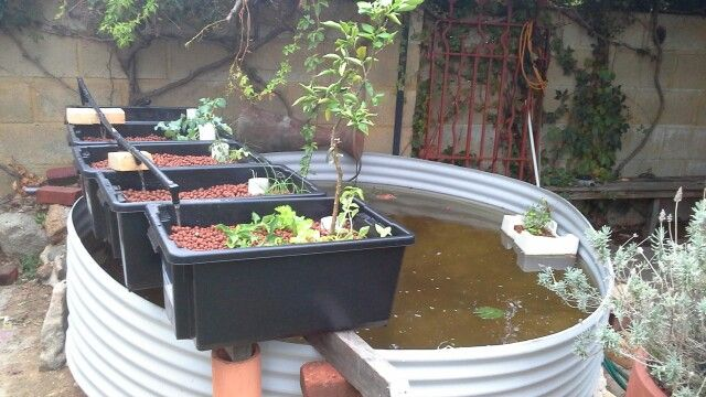 Aquaponic system now operational.