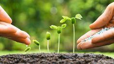 Der Boden braucht im Frühjahr besondere Pflege.